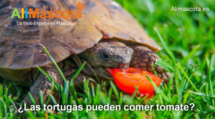 las tortugas pueden comer tomate