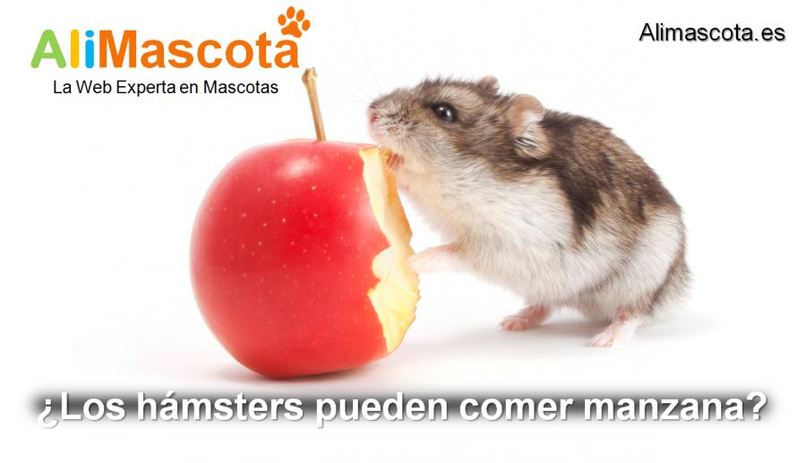 los hámsters pueden comer manzana