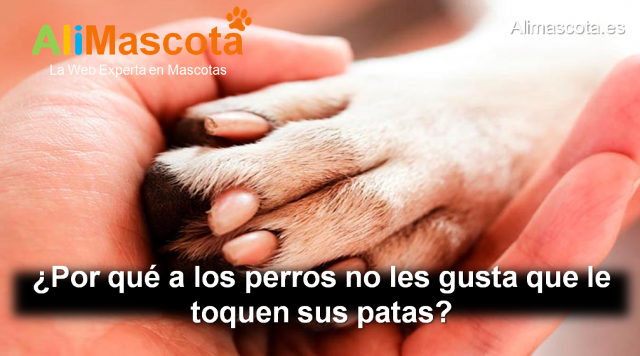 por qué a los perros no les gusta que le toquen las patas