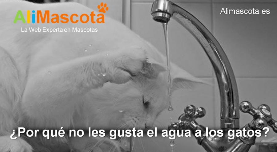 por qué no les gusta el agua a los gatos