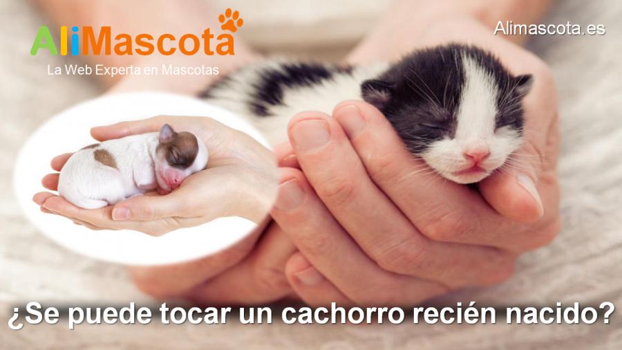 se puede tocar un cachorro recién nacido