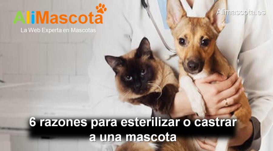 ventajas de esterilizar o castrar a una mascota