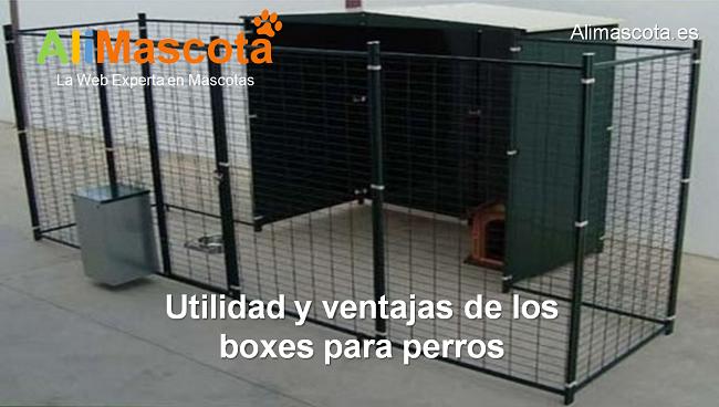 Utilidad y ventajas de los boxes para perros