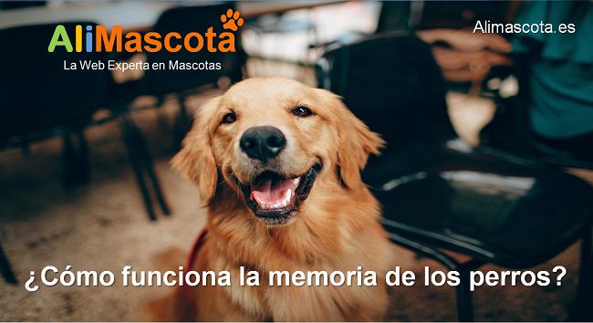 cómo funciona la memoria de los perros