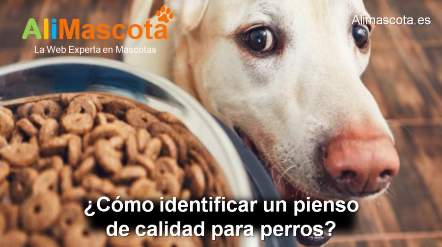 cómo identificar un pienso de calidad para perros