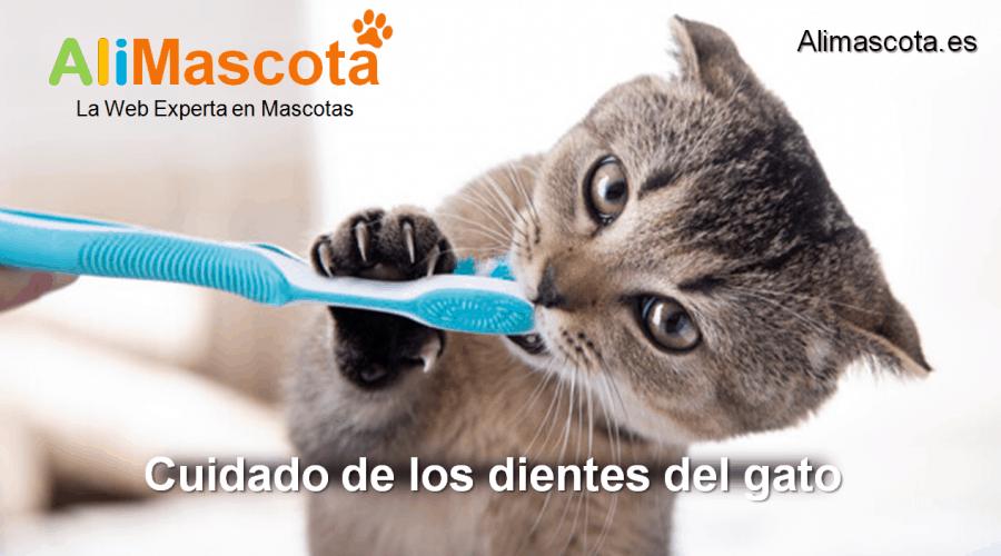 cuidado de los dientes del gato