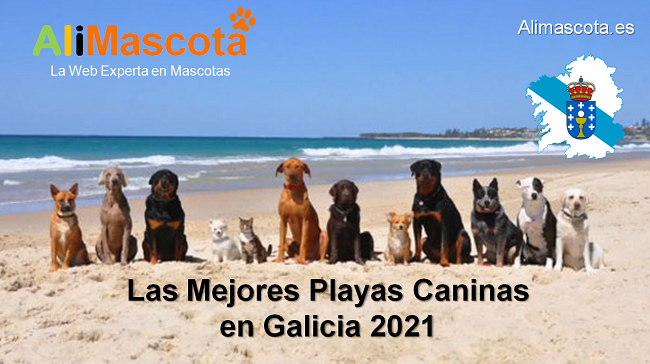 las mejores playas caninas en Galicia 2021