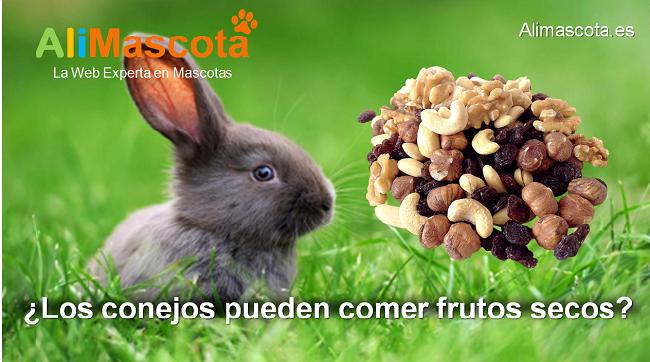 los conejos pueden comer frutos secos