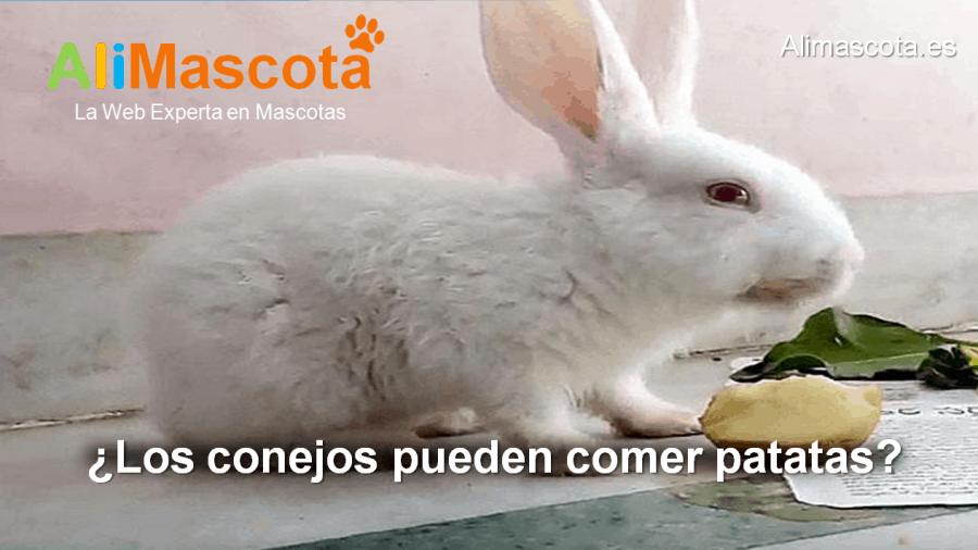 los conejos pueden comer patatas