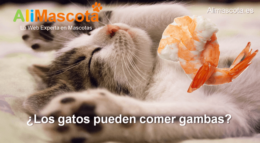 los gatos pueden comer gambas
