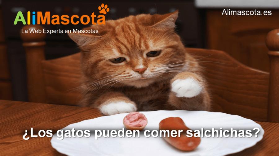 los gatos pueden comer salchichas