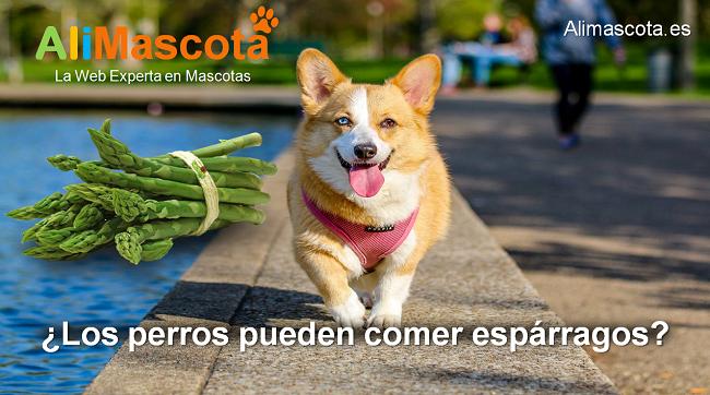 los perros pueden comer espárragos