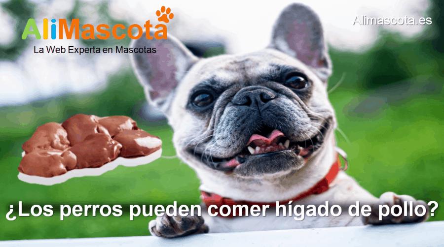 los perros pueden comer hígado de pollo