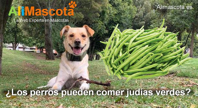 los perros pueden comer judías verdes