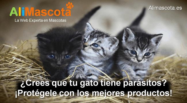 cómo evitar que mi gato tenga parásitos