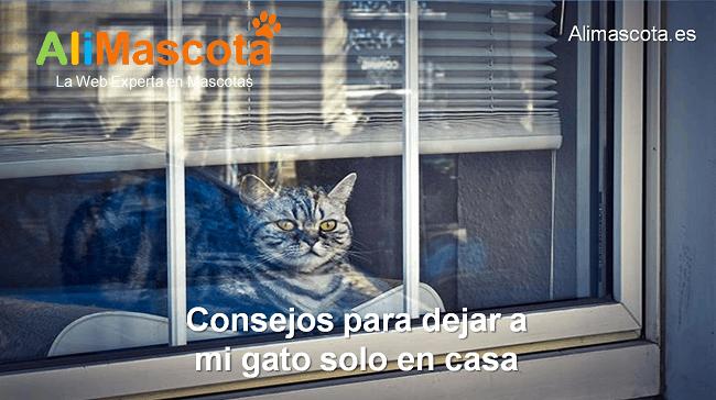 consejos para dejar a mi gato solo en casa