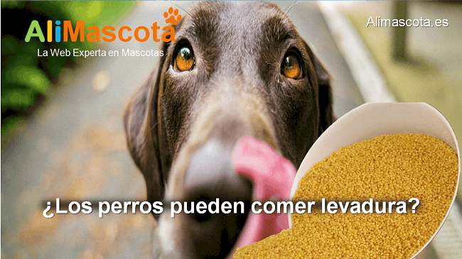 los perros pueden comer levadura