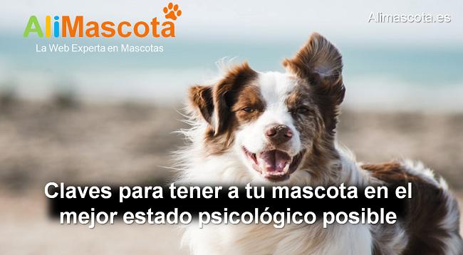 claves para tener una mascota en el mejor estado psicológico