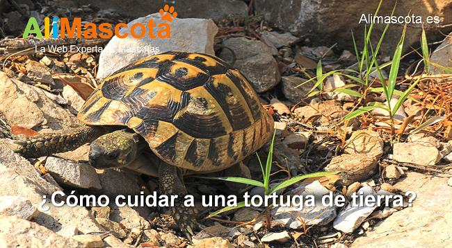 cómo cuidar a una tortuga de tierra