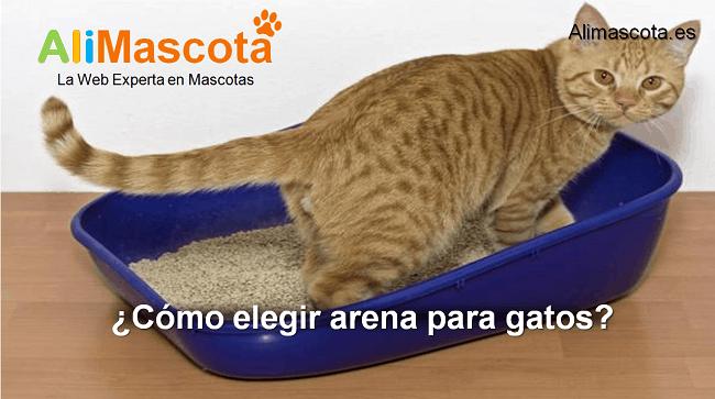 cómo elegir arena para gatos