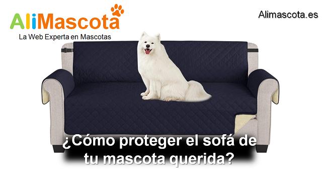 cómo proteger el sofá de tu mascota querida