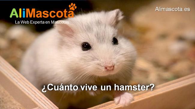cuánto vive un hamster