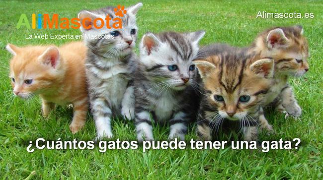cuántos gatos pueden tener una gata