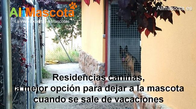 importancia de las residencias caninas