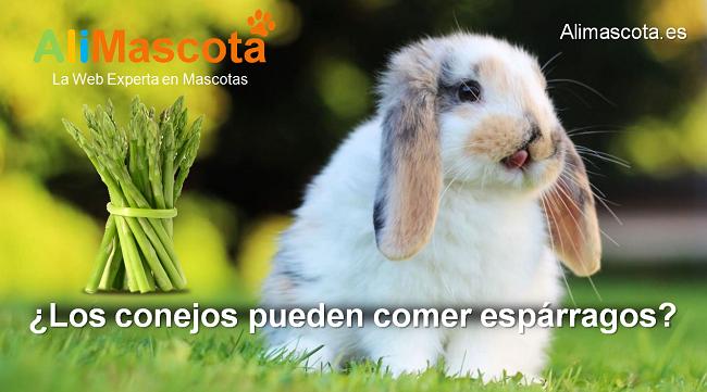 los conejos pueden comer espárragos