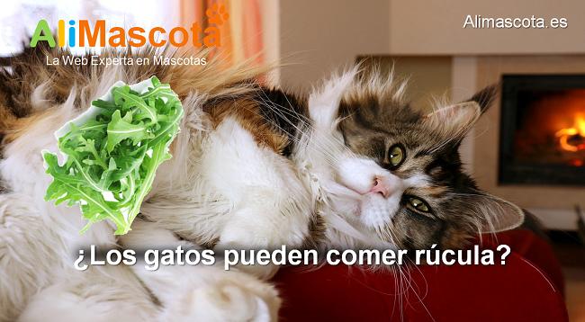 los gatos pueden comer rúcula
