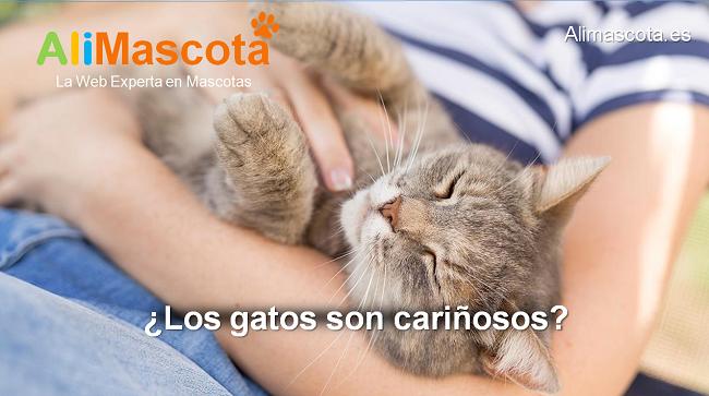 los gatos son cariñosos