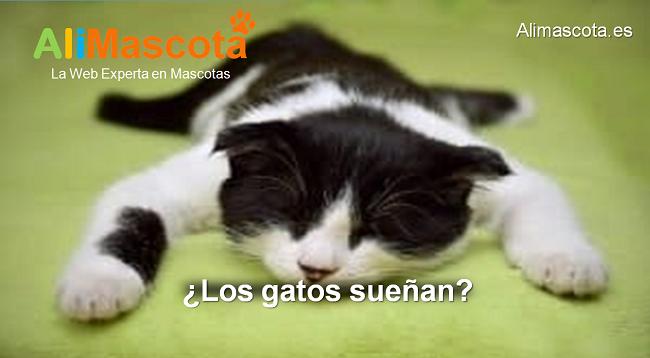 los gatos sueñan